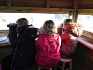 Big schools birdwatch 2016